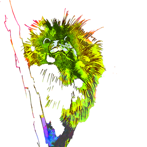 kookaburragreenweb